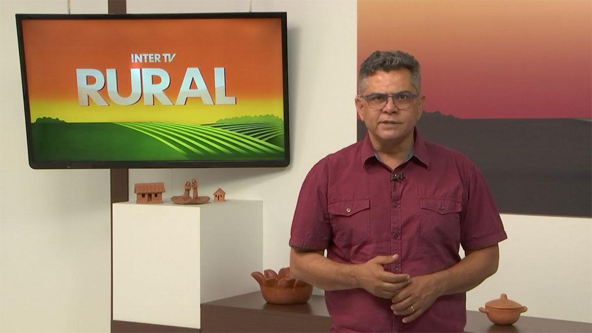 You are currently viewing Conheça duas espécies de capim desenvolvidas pela Embrapa